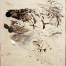 Detritus (Palette 17)